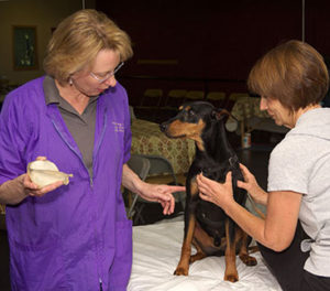 one-on-one instruction at the Lang Institute for Canine Massage program