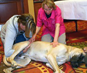 Joanne Lang provides one-on-one instruction on dog massage techniques