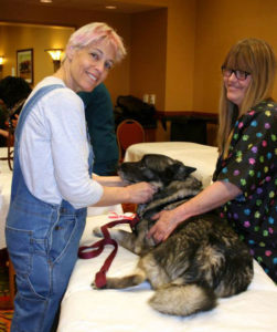 Students practice dog massage techniques